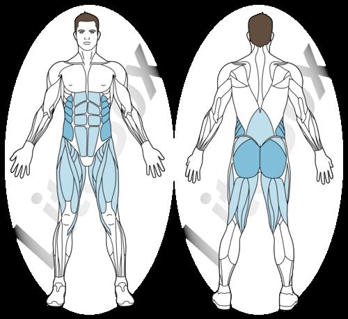 ponts jiu-jitsu brésilien muscles sollicités