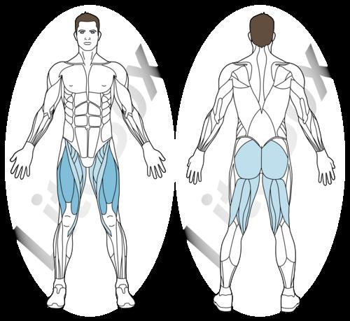 chaise muscles sollicités