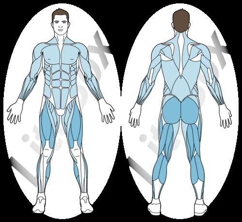corde à sauter muscles sollicités