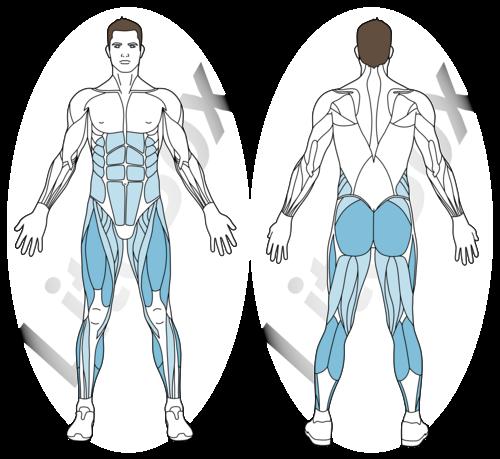 courir sur place et levés de genoux muscles sollicités