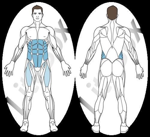 V-up alterné muscles sollicités