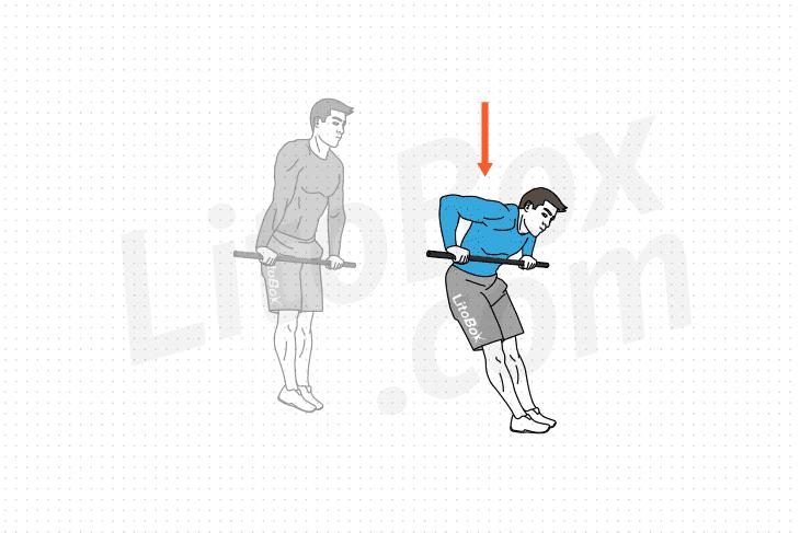 dips à la barre fixe exercice