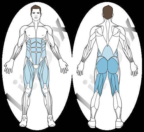 deadlift sur une jambe muscle sollicité