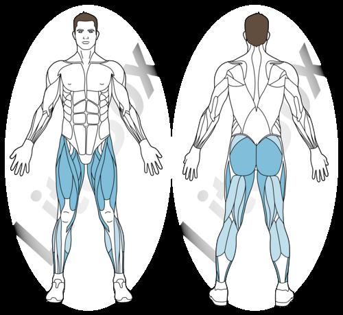 fentes croisées muscles sollicités