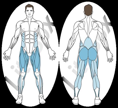 fentes latérales muscles sollicités