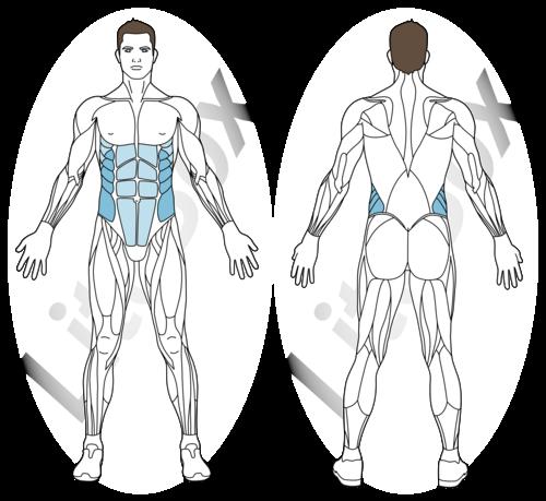 muscles sollicité abdominaux toucher de cheville / de talon