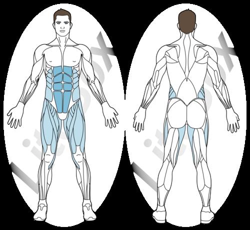 position hollow muscles sollicités
