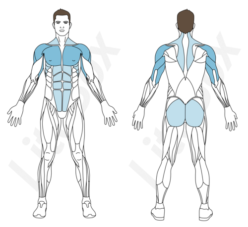 pompes hindu muscles sollicités