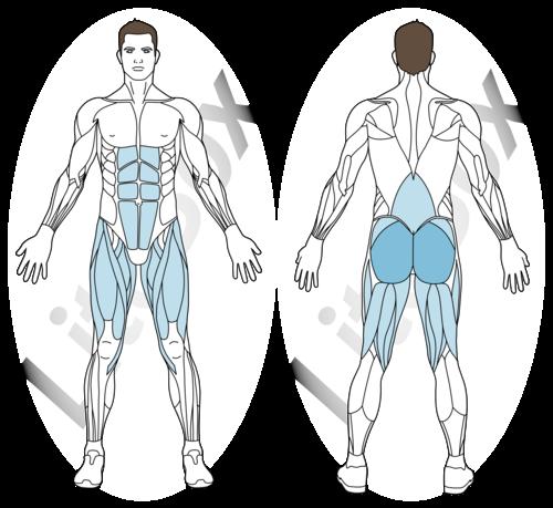 relevé de bassin épaules surélevées muscles sollicités