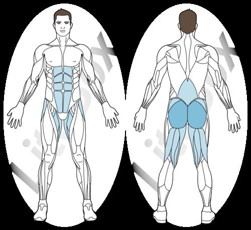 relevé de bassin pieds surélevés muscles sollicités