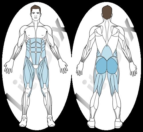 relevé de bassin sur une jambe muscles sollicités