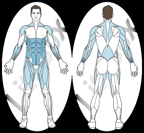sauts mogul muscles sollicités