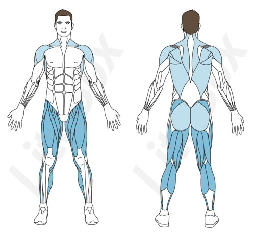 jumping jack muscles sollicités