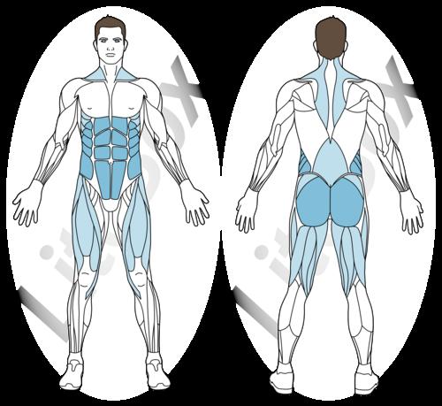 langouste exercice muscles sollicités