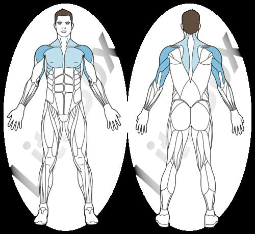 pompes HPSU ou ATR muscles travaillés