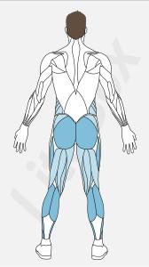 muscles des mollets (triceps sural)